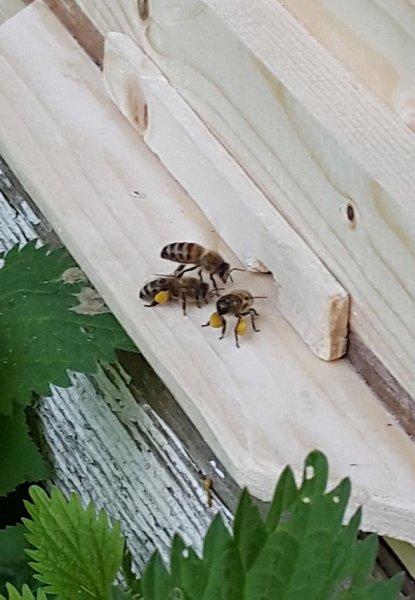 Bienenkiste-Markus-Julius-3-10x15s