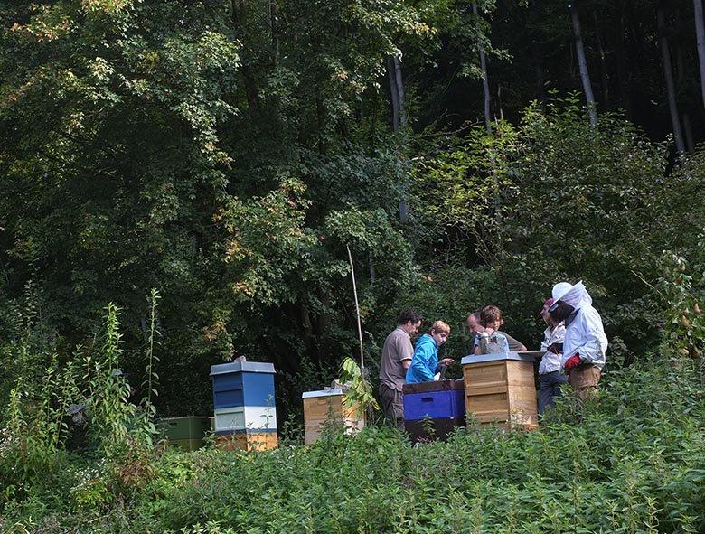 Bienenstand-Etzwiesen-2-small