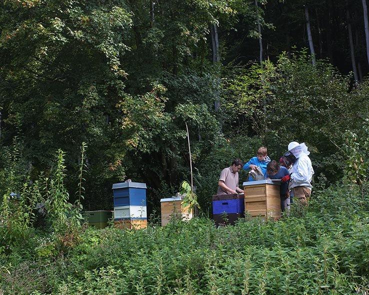 Bienenstand-Etzwiesen-3-small