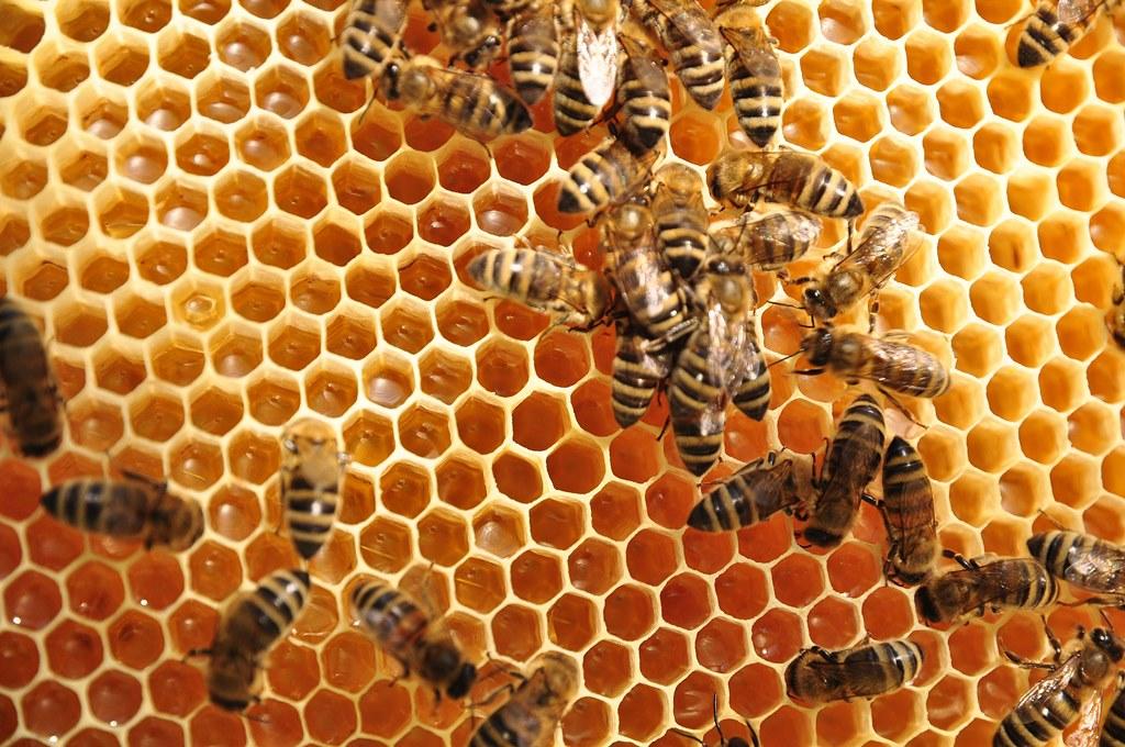 4 Honigeintrag