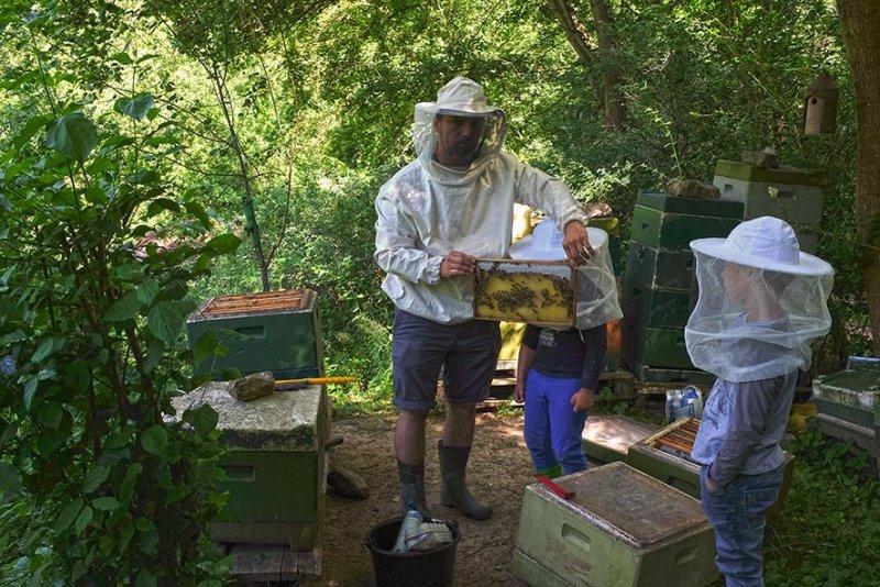 Honigernte-1-10x15s
