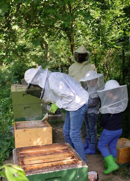 Honigernte-2-10x14s