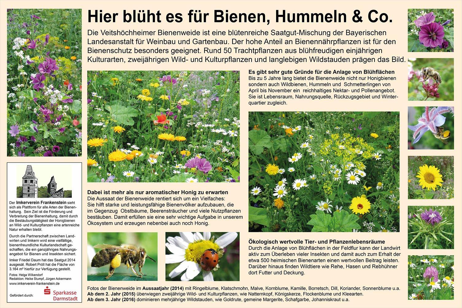 Bienenweide OB reduziert