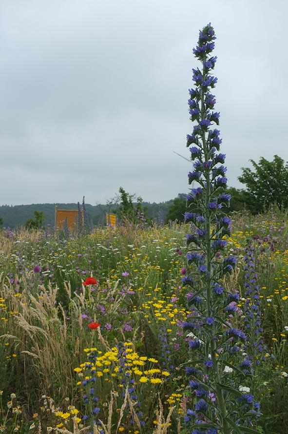Blumenwiese 10 10x15s