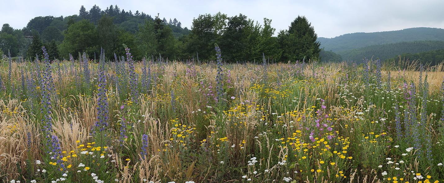Blumenwiese 5 10x24s