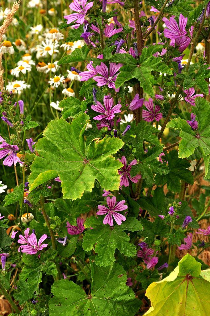 Blumenwiese Details