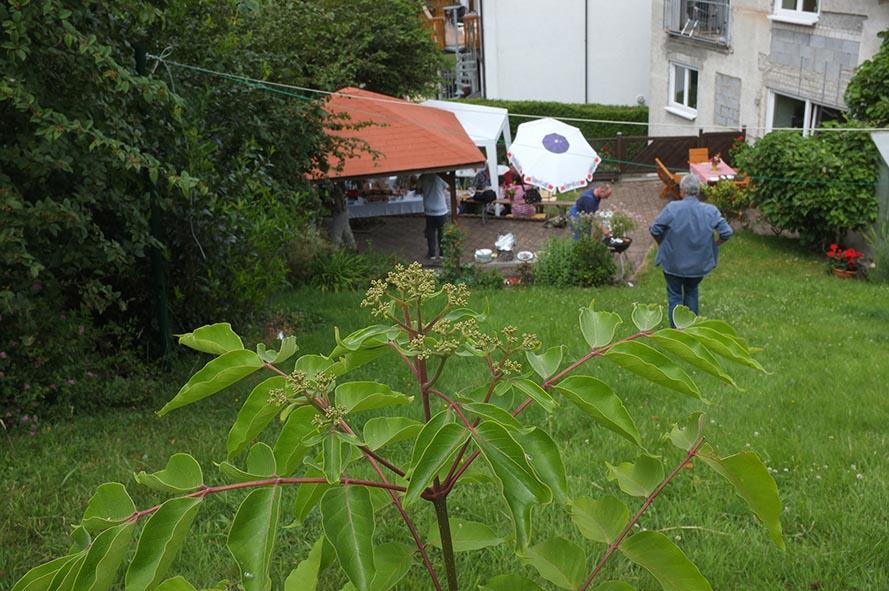 Imker-Sommerfest - Bienenbaum 01 10x15s