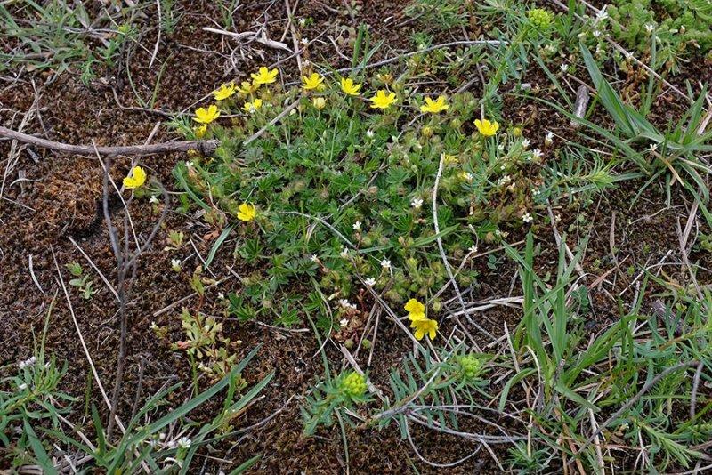 Trockenbiotop-Pflanze-1-10x15s