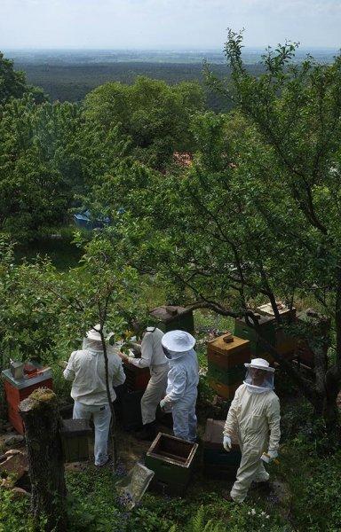 Honigernte-bei-Ecki-1-10x15s.jpg