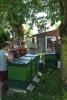 Sommerfest Imkerverein - Standbegehung 05