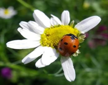 Bienenweide 05