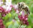 Bienenweide 07