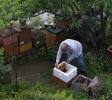 Arbeiten am Bienenstand 1