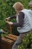 Arbeiten am Bienenstand 9