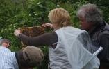 Arbeiten am Bienenstand 10