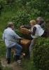 Arbeiten am Bienenstand 11