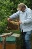 Arbeiten am Bienenstand 2