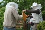 Arbeiten am Bienenstand 3
