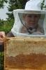 Arbeiten am Bienenstand 4