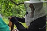Arbeiten am Bienenstand 5