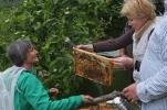 Arbeiten am Bienenstand 6