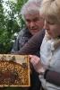 Arbeiten am Bienenstand 7
