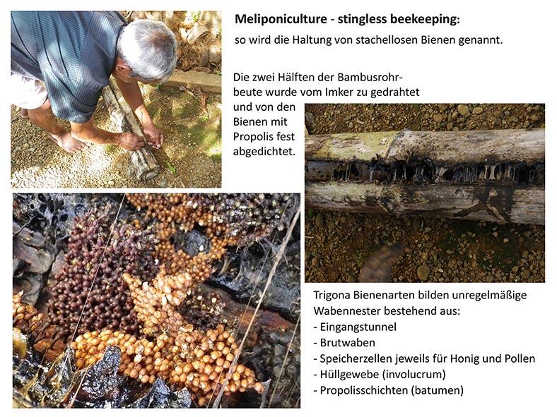 Stachellose Bienen von Kerala 05