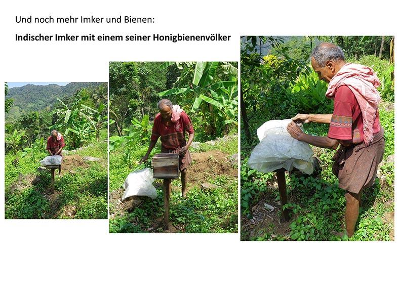Stachellose Bienen von Kerala 19