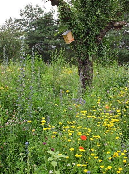 Bienenweide-1-10x13s
