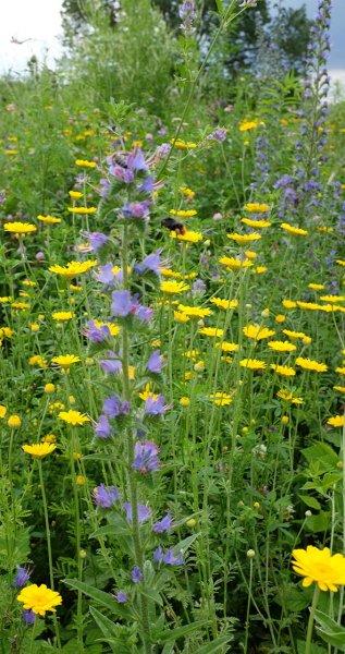 Bienenweide-4-10x19s