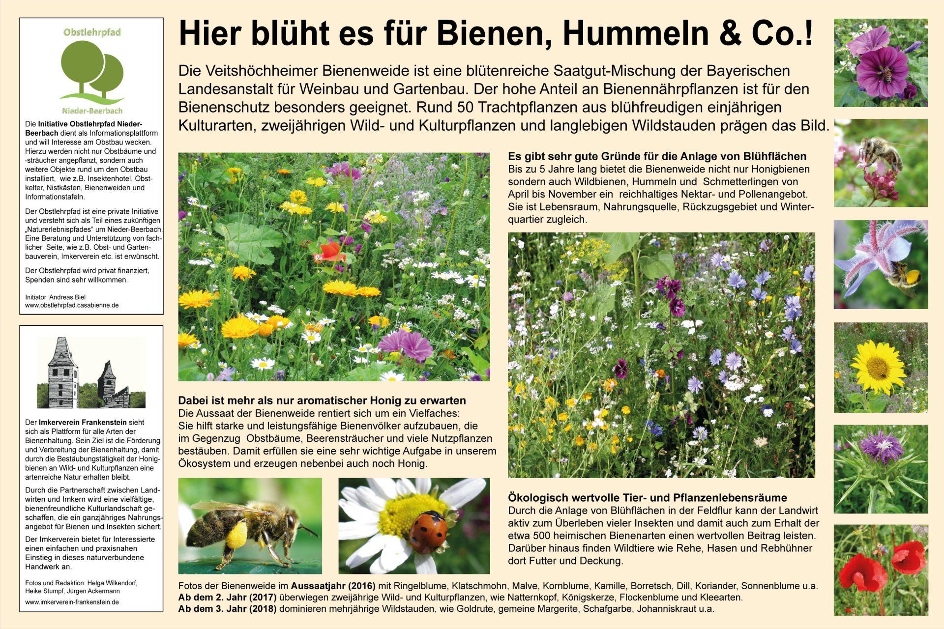 Bienenweide-NB-24-7-16