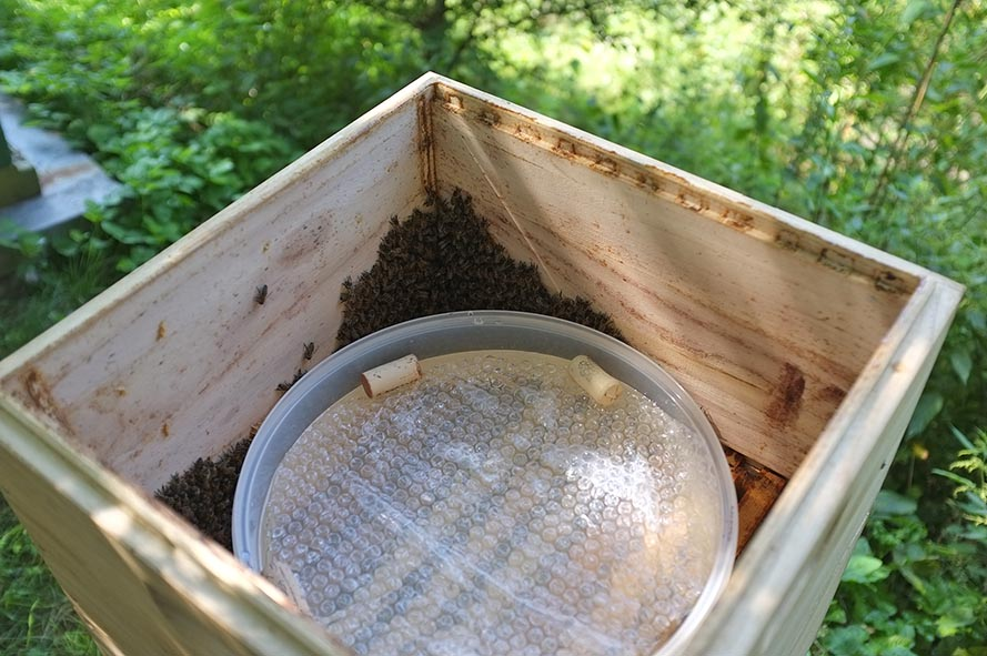 Bienenfütterung Einstiegshilfe 1