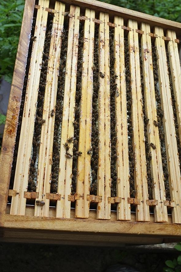 Bienenvolk aufgefüttert