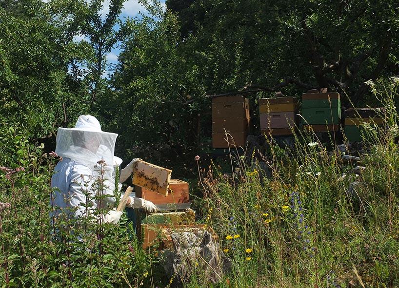 Honigernte Eckis Bienenstand 1
