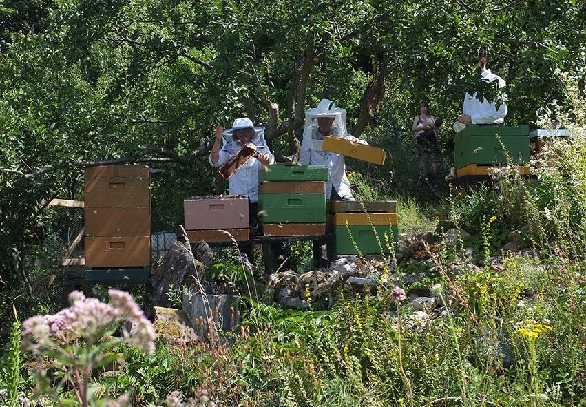 Honigernte Eckis Bienenstand 4