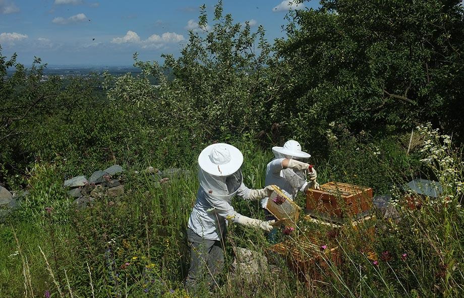 Honigernte Eckis Bienenstand 2