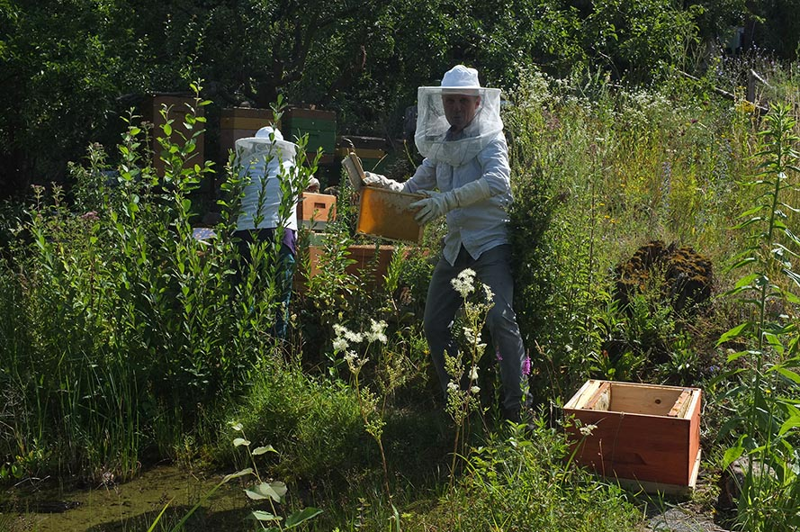 Honigernte Eckis Bienenstand 3