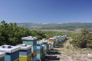 Foto: Tino Westphal - Bienenstand in den dalmatischen Bergen bei Knin