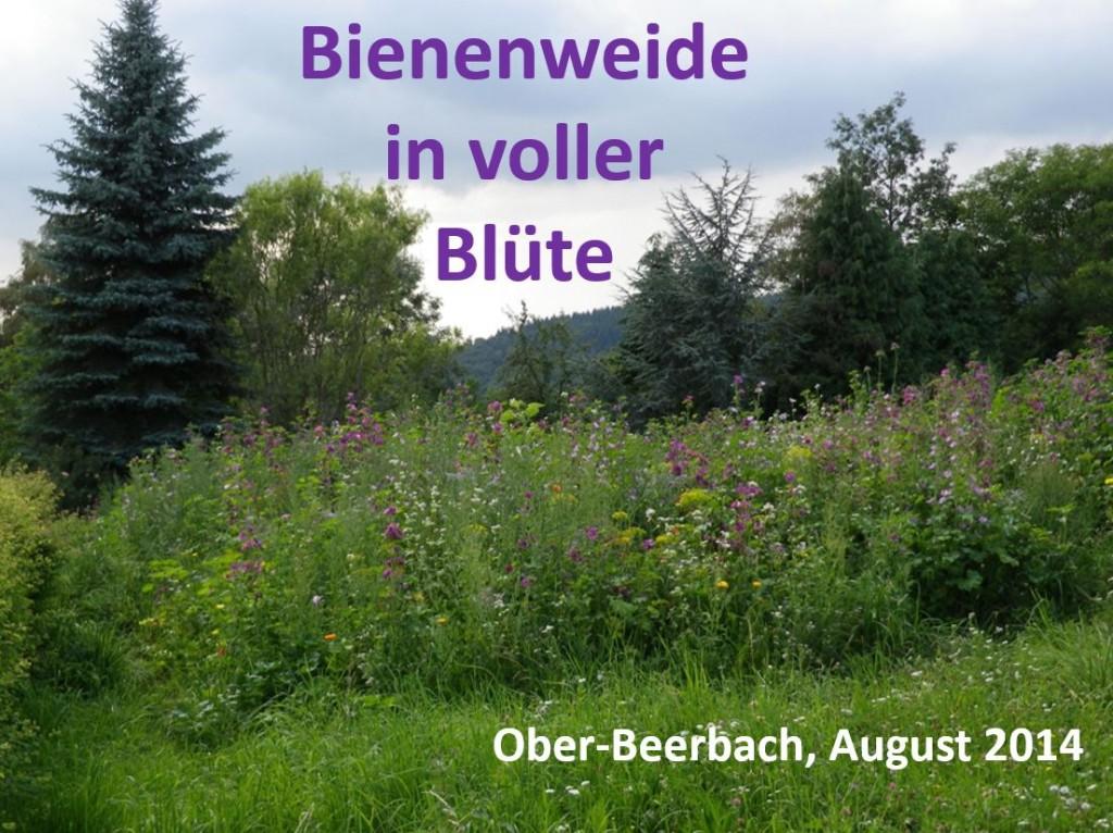 Bienenweide_01
