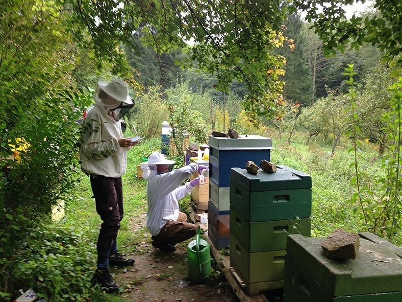 Fotos: NABU/Tino Westphal – Imkerkurs auf den Etzwiesen – Langzeit-Behandlung mit Ameisensäure