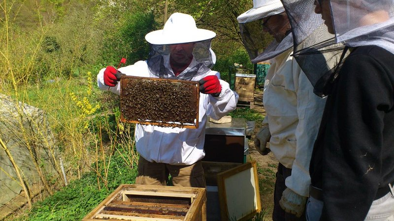Fotos: Jacky Pörner – Arbeit am Bienenstock
