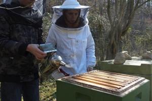 Bienenstand-Etzwiesen-1