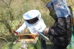 Bienenstand-Etzwiesen-2