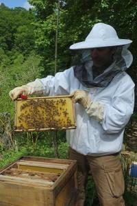 Fotos: Tino Westphal – Bienenkurs Etzwiesen – Frischer Honig
