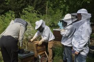 06-Bienenkurs-Etzwiesen-Arbeit-am-Bienenvolk-10x15s