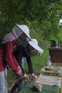 Bienengruppe-3-10x15s