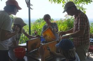 Fotos: Tino Westphal – Honigwaben werden entdeckelt.