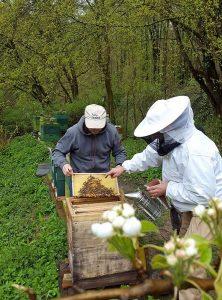Frischer Honig ist eingetragen.