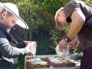 Fotos: Markus Hennecke und Tino Westphal – Fütterung von Ablegern mit Honigschaum