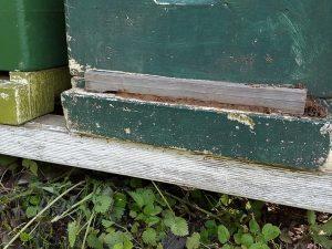 Eingeengtes Flugloch. da passen gerade 2 Bienen nebeneinander durch. So wird Räuberei verhindert. Das geht auch mit etwas Lehm…